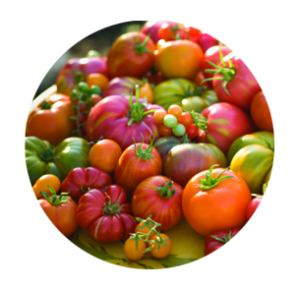 tomatoes-harvestr